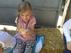 Year 1 visited Smithills Open Farm 1