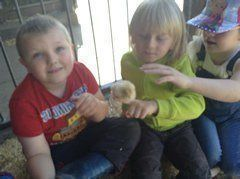Year 1 visited Smithills Open Farm 3