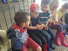 Year 1 visited Smithills Open Farm 5