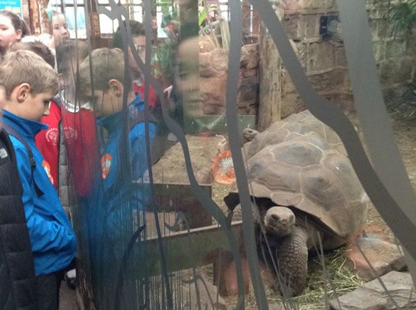 Year 6 spent the day at Chester Zoo - December 2017 3