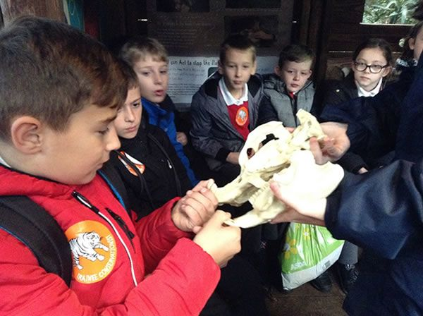 Year 6 spent the day at Chester Zoo - December 2017 4