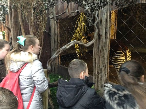 Year 6 spent the day at Chester Zoo - December 2017 6