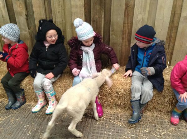 Year One's visit to Smithills Farm - February 2018 2