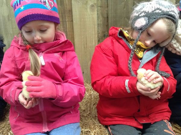 Year One's visit to Smithills Farm - February 2018 3