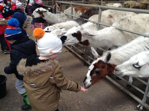 Year One's visit to Smithills Farm - February 2018 7